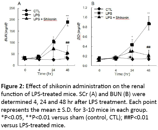 clinical-experimental-nephrology-Effect-shikonin-administration